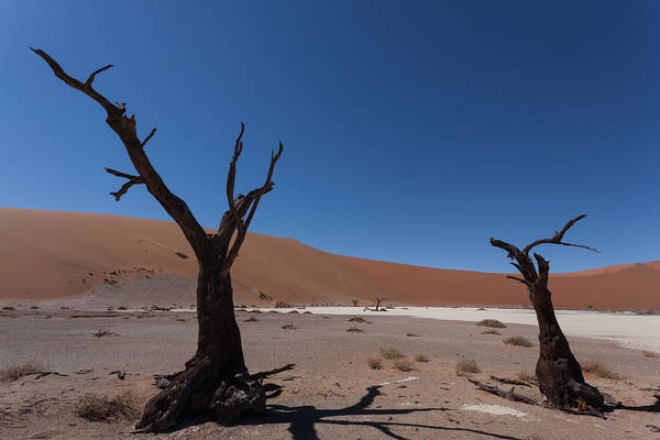 Kalahari Art Print featuring the photograph Death Tree Hidden Vlei by Davide Guidolin