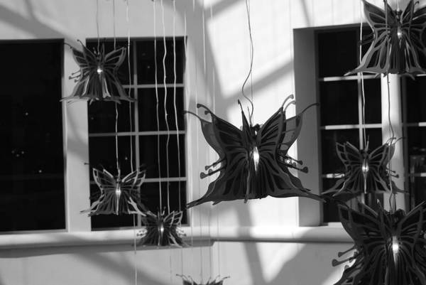 Black And White Art Print featuring the photograph Hanging Butterflies by Rob Hans