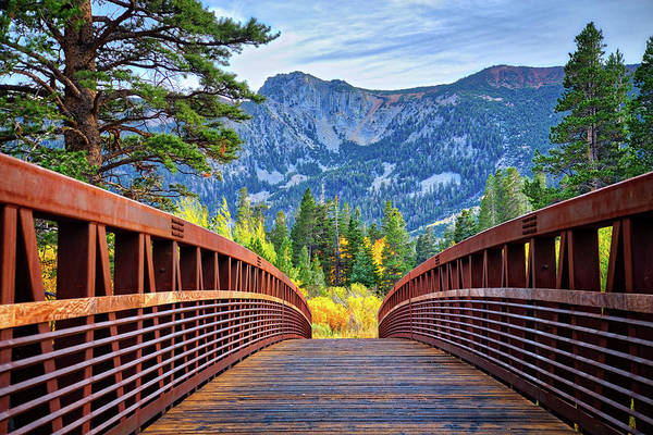 Bridge Art Print featuring the photograph A Bridge To Beauty by Lynn Bauer