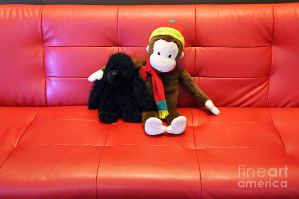 A Couple Of Monkeys Art Print featuring the photograph A Couple Of Monkeys by Jennifer Robin