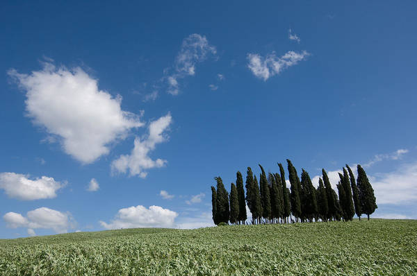 Photography Art Print featuring the photograph A Group Of Cypress Trees Dot A Tuscan by Joel Sartore