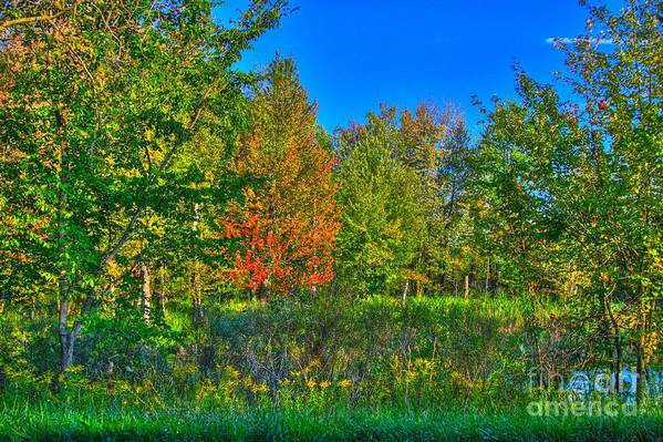 Related Tags: Art Print featuring the photograph A Hint Off Fall by Robert Pearson