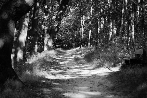 Deutschland Art Print featuring the photograph A Walk In The Woods by Edward Myers