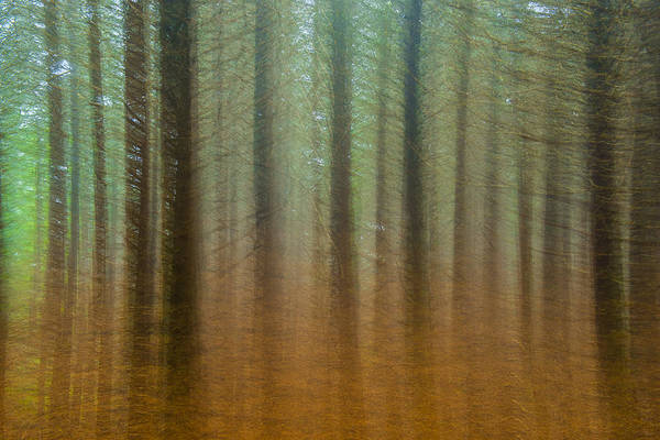 Autumn Art Print featuring the photograph Abstract Pines by Joye Ardyn Durham