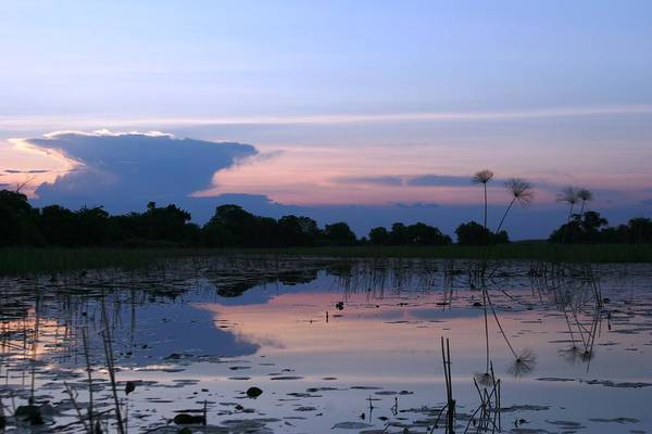 African Delta Art Print featuring the photograph African Delta by Linda Russell