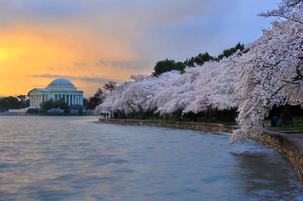 National Cherry Blossom Festival Art Print featuring the photograph After The Rain by Bernard Chen
