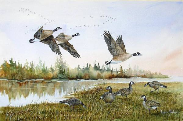 Aleutian Geese Art Print featuring the painting Aleutian Geese At Lake Earl by Lynne Parker