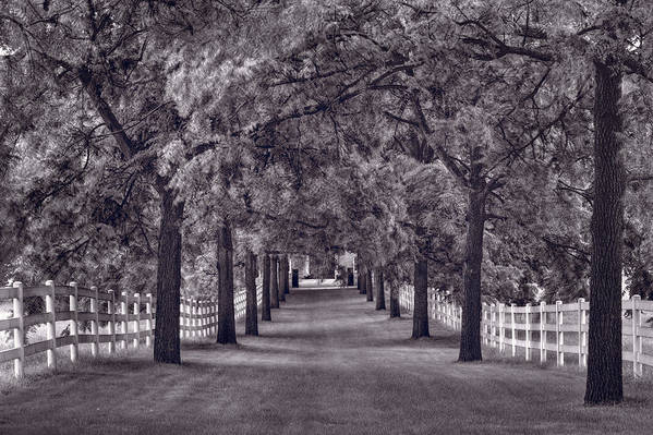 Allee Art Print featuring the photograph Allee Way Bw by Steve Gadomski