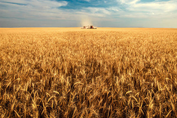 Two Art Print featuring the photograph America's Breadbasket by Todd Klassy
