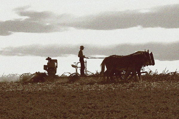 Amish Art Print featuring the photograph Amish Farmer 2 by Lou Ford