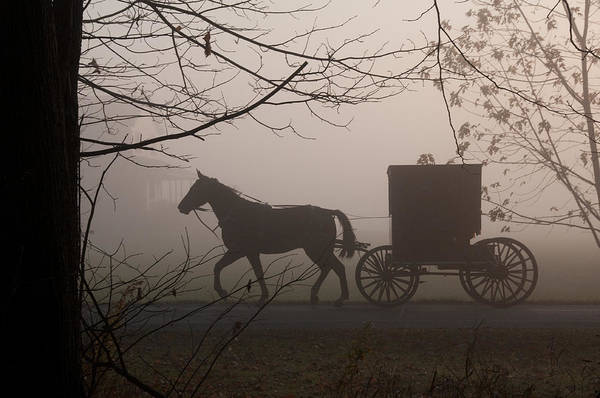 Amish Buggy Art Print featuring the photograph Amish Morning 1 by David Arment