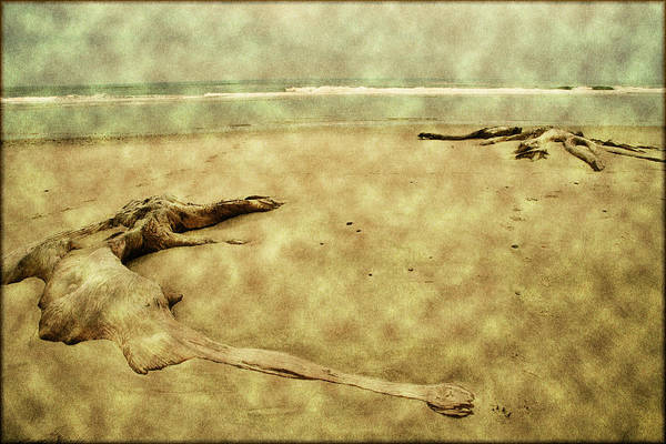 Oregon Beach Art Print featuring the photograph Ancient Tree Roots by Bonnie Bruno