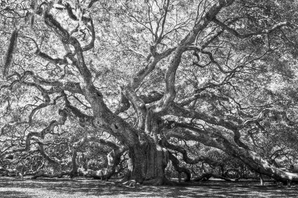 Ancient Art Print featuring the photograph Angel Oak II by Drew Castelhano