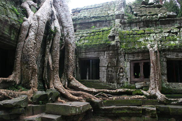 \angkor Wat\ Cambodia \siem Reap\ Historical Ancient Kymer Tree Roots Moss Art Print featuring the photograph Angkor Wat by Linda Russell