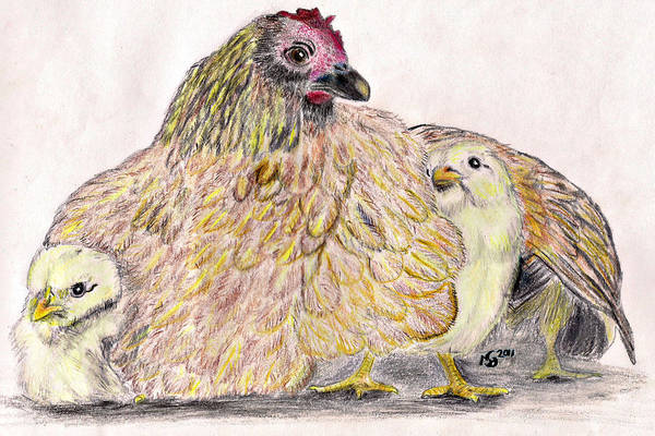 Chickens Art Print featuring the drawing As A Hen Gathereth Her Chickens Under Her Wings by Marqueta Graham