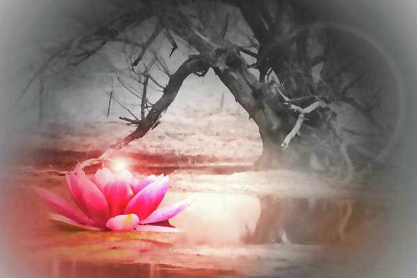Lotus Art Print featuring the photograph Aura Of Life by Cathy Beharriell