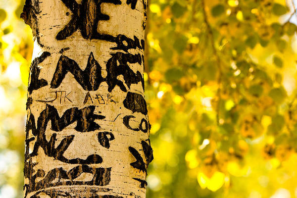 Aspens Art Print featuring the photograph Autumn Carvings by James BO Insogna