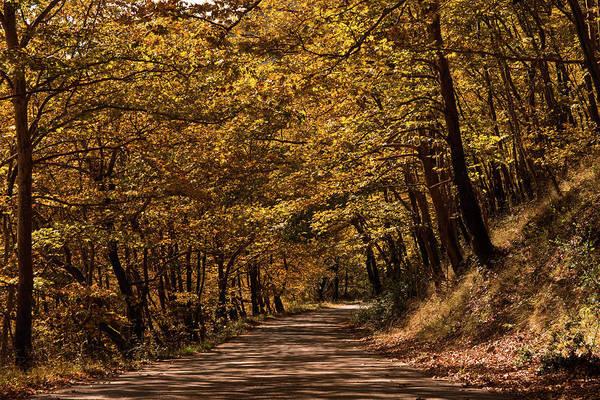 Landscape Art Print featuring the photograph Autumn Colours by Nikos Stavrakas