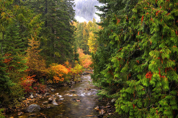 Autumn Art Print featuring the photograph Autumn Creations by Eggers Photography
