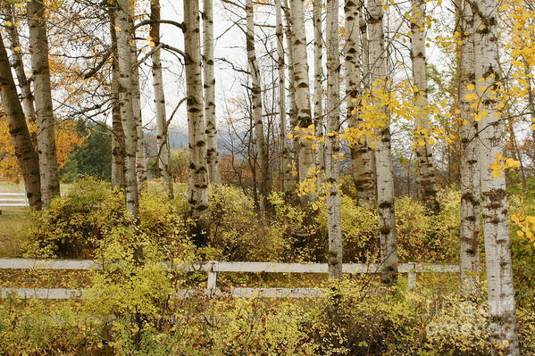Grove Art Print featuring the photograph Autumn Grove by Idaho Scenic Images Linda Lantzy