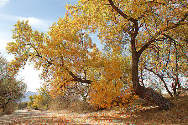Autumn Art Print featuring the photograph Autumn In Cdo Wash by Greg Taylor