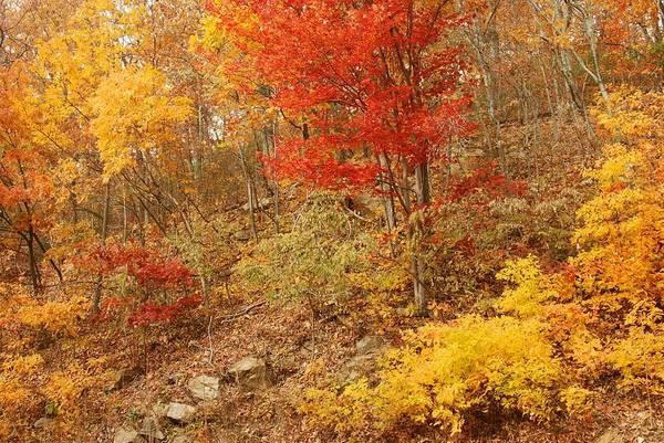 Shenandoah Art Print featuring the photograph Autumn In Shenandoah by Stephen Vecchiotti