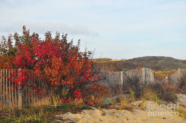 Fall Art Print featuring the photograph Autumn In The Dunes by Catherine Reusch Daley
