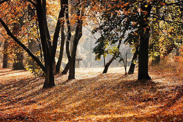 Morning Art Print featuring the photograph Autumn In The Park by Andriy Zolotoiy