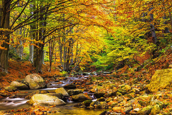 Balkan Mountains Art Print featuring the photograph Autumn Landscape by Evgeni Dinev