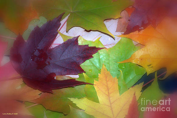 Trees Art Print featuring the photograph Autumn by Larry Keahey