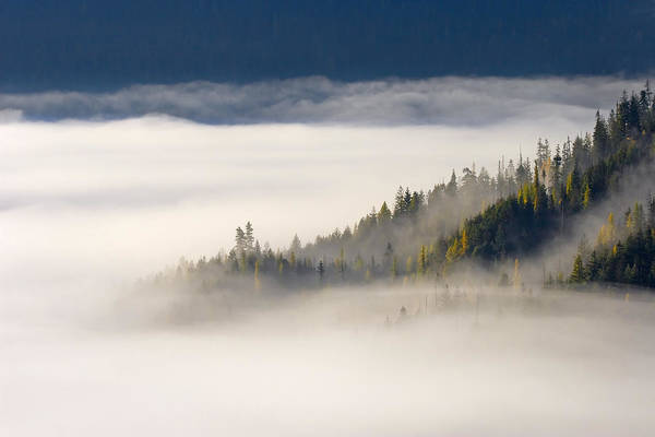 Fog Art Print featuring the photograph Autumn Morn by Mike Dawson