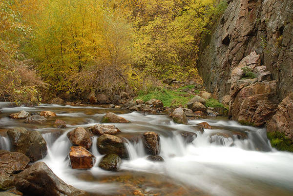 Provo River Art Print featuring the photograph Autumn On The Provo River by Dennis Hammer