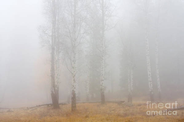 Fog Art Print featuring the photograph Autumn Reveals by Mike Dawson