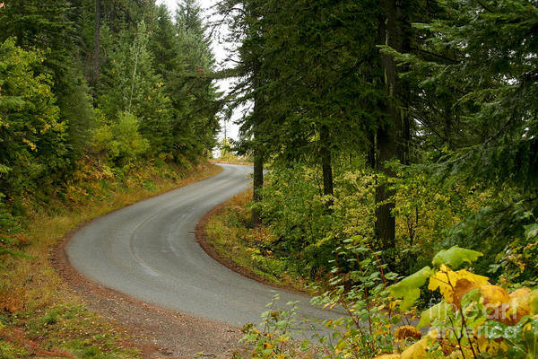 Road Art Print featuring the photograph Autumn Road by Idaho Scenic Images Linda Lantzy