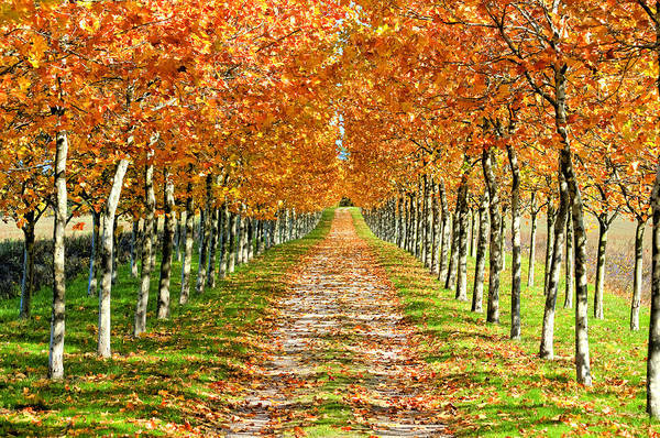 Horizontal Art Print featuring the photograph Autumn Tree by Julien Fourniol/Baloulumix