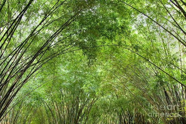 Nature Art Print featuring the photograph Bamboo Trees In Wangjianglou Park In Chengdu China by Julia Hiebaum