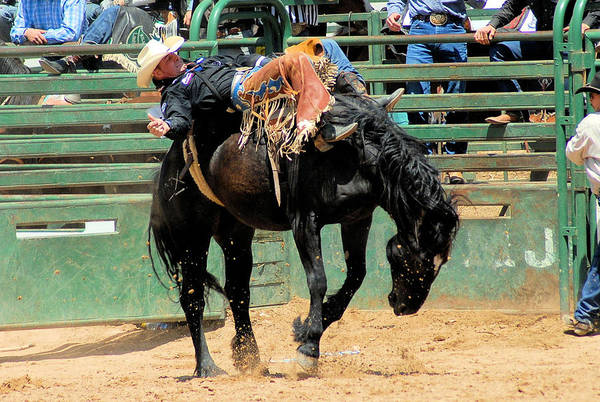 Rodeo Photos Art Print featuring the photograph Bareback Bronc Rider by Cheryl Poland