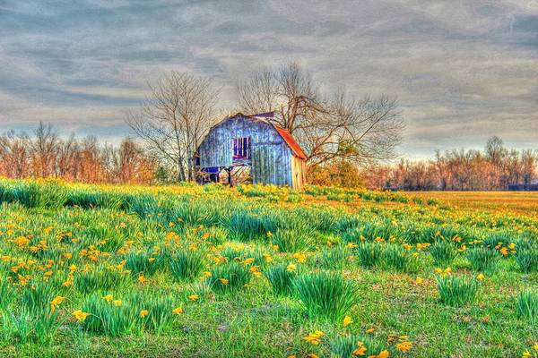 Barn Print featuring the photograph Barn In Field Of Flowers by Geary Barr