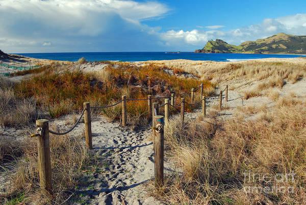 Path Art Print featuring the photograph Beach Path 2 by Karen Lewis