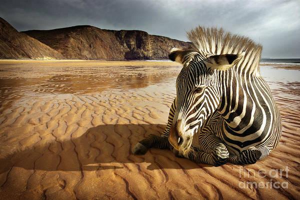Africa Art Print featuring the photograph Beach Zebra by Carlos Caetano