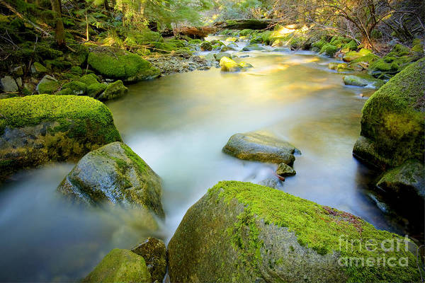 Creek Art Print featuring the photograph Beauty Creek by Idaho Scenic Images Linda Lantzy