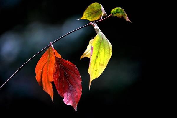 Autumn Art Print featuring the photograph Beauty In Simplicity by Karen Majkrzak