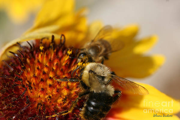 Bee Art Print featuring the photograph Bee Two by Silvana Siudut