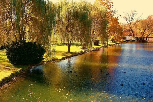 Pond Art Print featuring the photograph Bellefonte by Debbie Summers