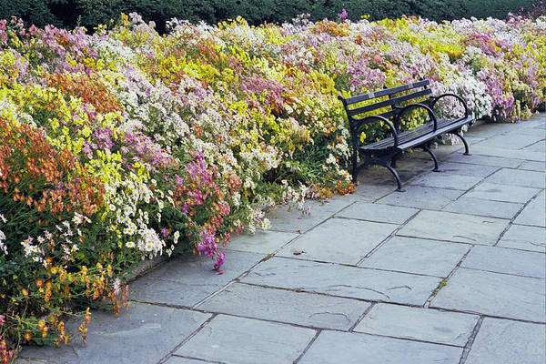 Fall Flowers? Art Print featuring the photograph Bench by Wes Shinn