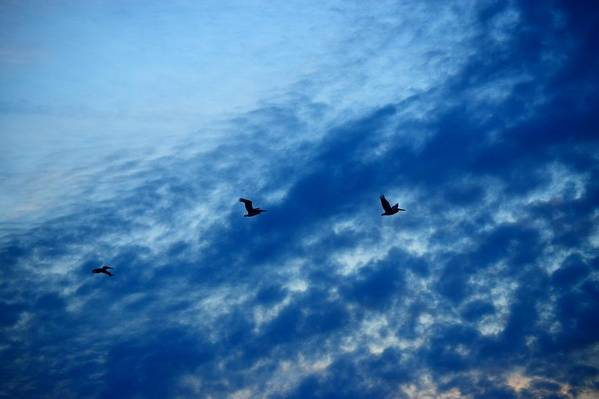Photography Art Print featuring the photograph Bird Set Free II by Adela Hittell