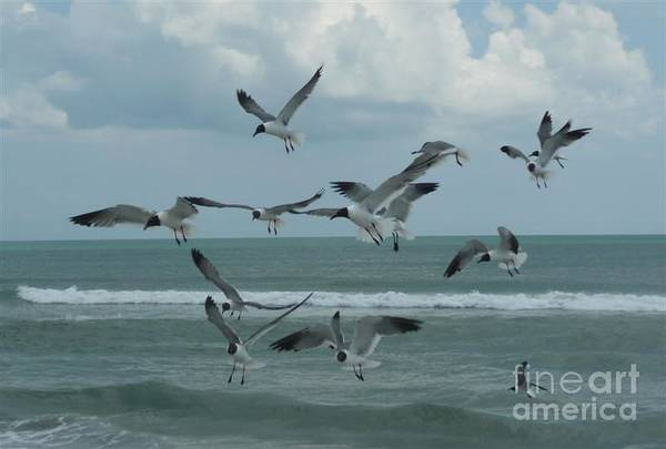 Birds Art Print featuring the photograph Birds In Flight by Barb Montanye Meseroll