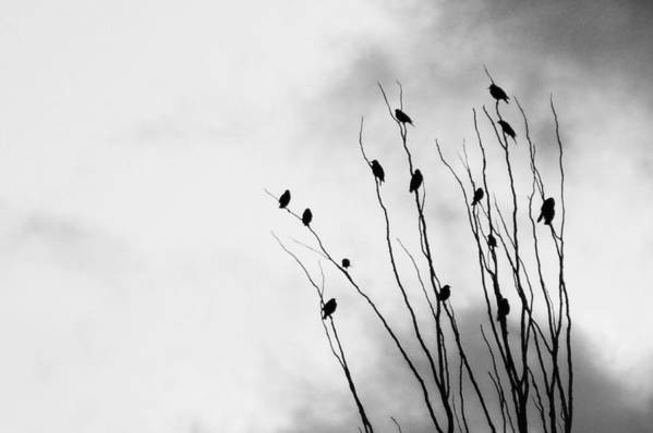 Birds Art Print featuring the photograph Birds Of A Feather by Shawn Wood