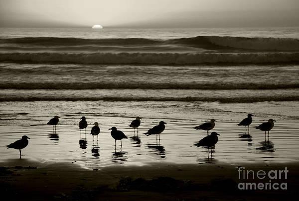 Beach Art Print featuring the photograph Birds On A Beach by Timothy Johnson