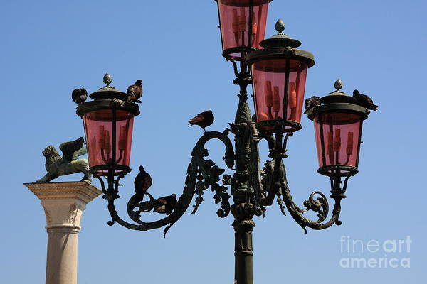 Venice Art Print featuring the photograph Birds On A Lamp Post In Venice by Michael Henderson